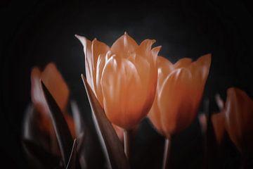 Oranje tulpen zwarte achtergrond van Consala van  der Griend