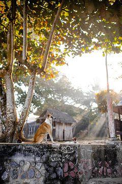 Un chien au lever du soleil aux Philippines sur Yvette Baur