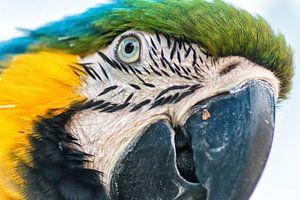 Macaw van