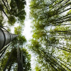 Bamboebos in kyoto van Michael Bollen