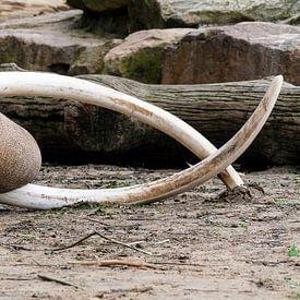 Olifant van Ab Wubben