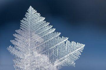 ice crystal macro against soft blue background.  van Susanne Bauernfeind