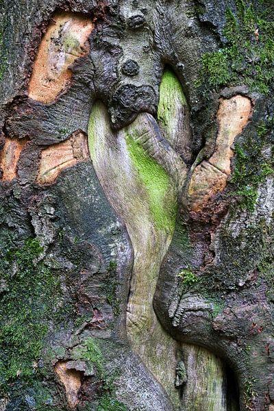 Baum Abstrakt von Borg Enders