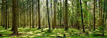 Forst von Günter Albers