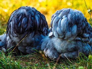 Fluffy butts van Miriam Meijer, en plein campagne.....