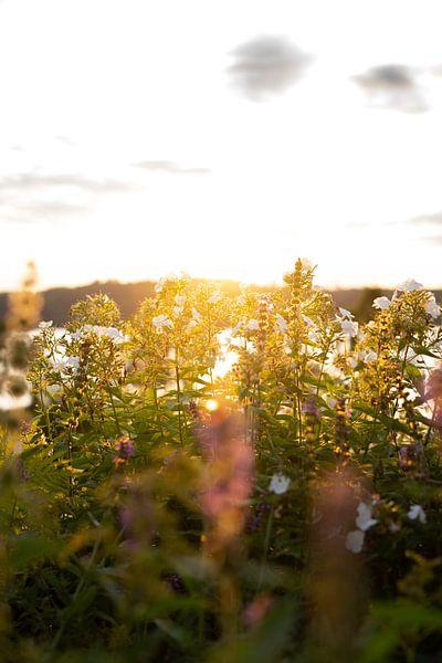 Bloemen in avondlicht van Tomas Grootveld