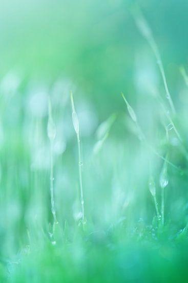 Magical green..