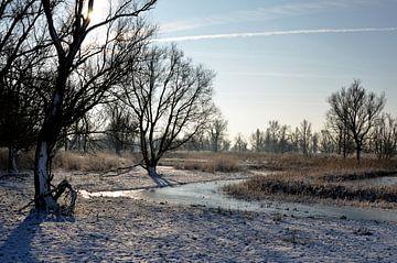 Oosvaardersplassen in de winter. von Frank de Ridder