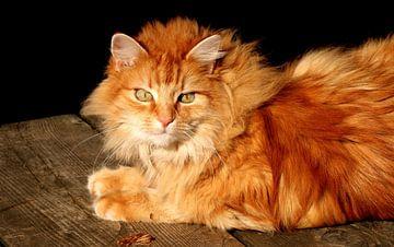 Tom s Katze sur hako photo