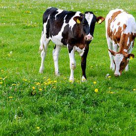 Hollands landschap met koeien van Sigrid Klop