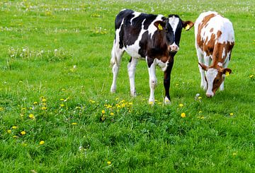 Paysage hollandais avec des vaches sur Sigrid Klop