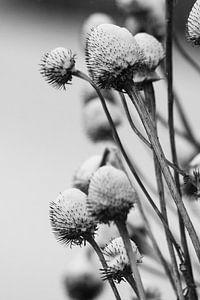 Cold flowers van Frank Bison