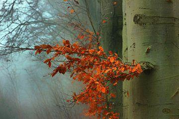 Farbkontrast im Liesbos von Cees van Gastel