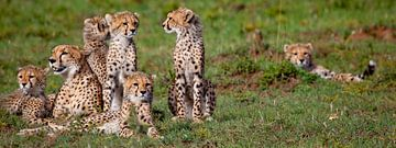Cheetah familie van Peter Michel