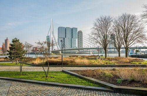 Het park aan de voet van de Erasmusbrug in Rotterdam