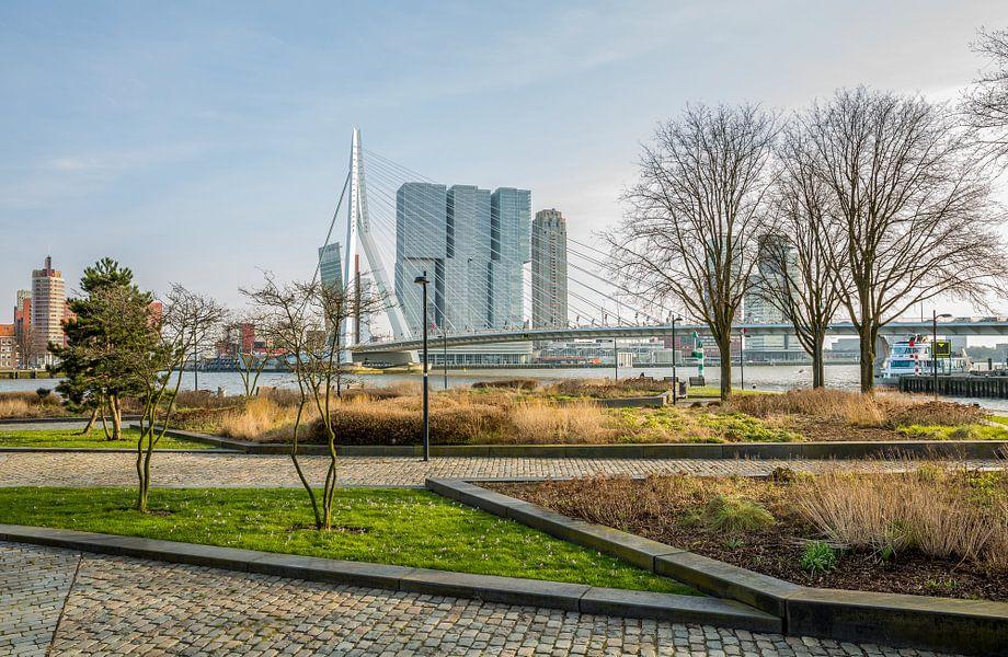 Het park aan de voet van de Erasmusbrug in Rotterdam van MS Fotografie