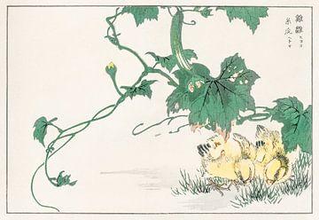 Kuiken illustratie door Numata Kashu van Studio POPPY