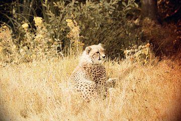 roofdier cheeta  von Thamara Janssen
