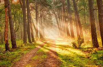 Zonnestralen in het bos sur Joost Lagerweij