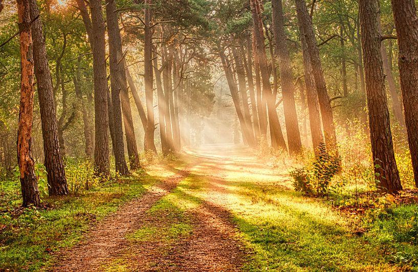 Zonnestralen in het bos von Joost Lagerweij