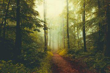 Mystischer Wald im Nebel von Dirk Wüstenhagen