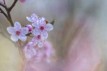 Blüte von Yvon NL