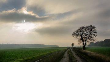 track across the fields van Georg Tausche