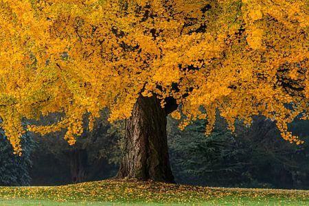 Der orange Baum