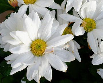 weiße Blumen von Artisticcreationsbyramona