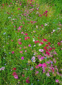 bloemenweide van Leopold Brix