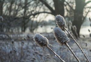 Sneeuw, zon en bloemen van