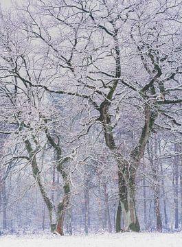 Handen in de koude lucht van Joris Pannemans - Loris Photography