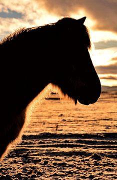 Silhouette d'un cheval islandais en hiver sur Elisa Hanssen