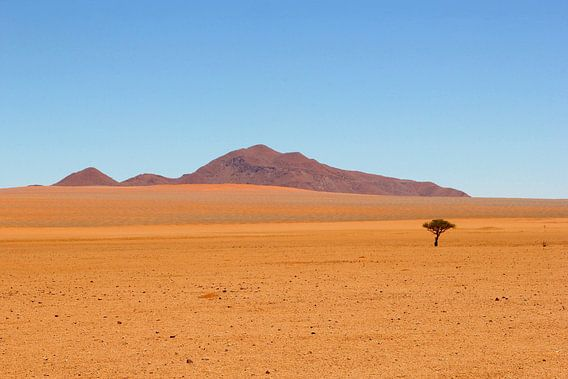 Eenzame boom, woestijn