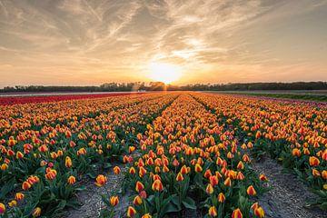 Zonsopkomst tulpenvelden. van Peter Haastrecht, van