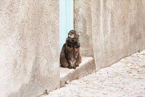 Kat in een dorpje in Zuid-Frankrijk