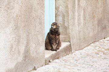Kat in een dorpje in Zuid-Frankrijk van