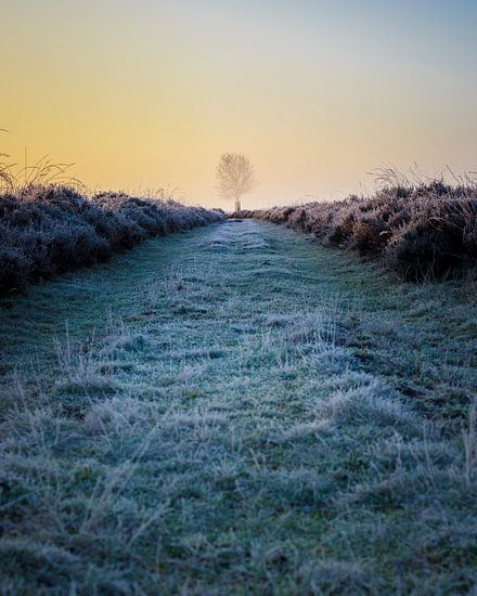 Solitary tree in frozen heather at sunrise (vertical)