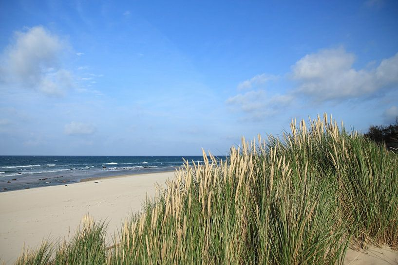 Strandhafer von Ostsee Bilder