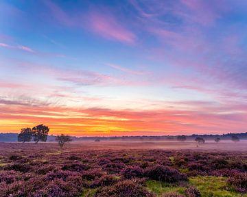 Zonsopgang De Hoorneboegse Heide van Anthony Trabano