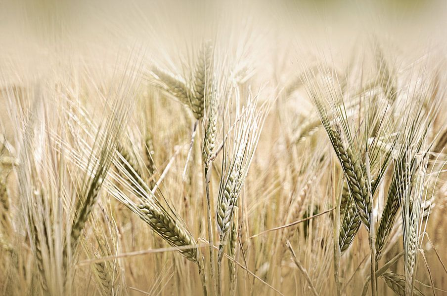 Champ de blé van Martine Affre Eisenlohr