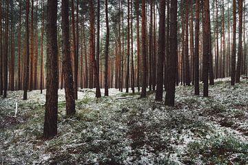 La neige dans la forêt de conifères sur Skyze Photography by André Stein
