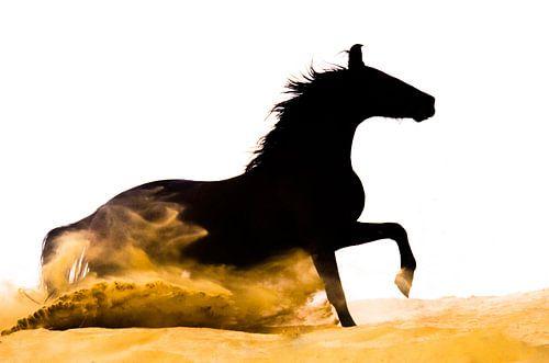 Marwari zand van