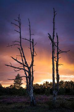 Herbstliche Pracht auf Heideflächen von Sjors Gijsbers