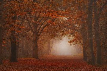 Dromerig mistig herfst bos . Muur behang . van Saskia Dingemans