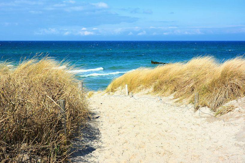 Path Through the Dunes to the Sea van Gisela Scheffbuch