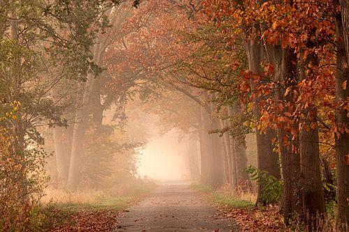 Sprookjesachtige herfstochtenden. van