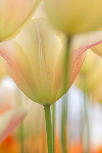 Tulpen in pastel van Teuni's Dreams of Reality