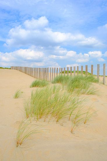 Zomer in de duinen bij het Noordzee strand