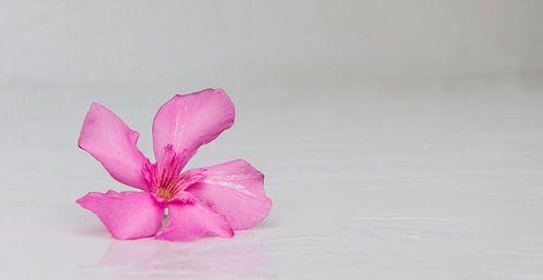 Abstracte foto van een bloem van